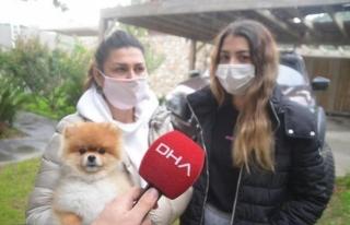 Bodrum'da, Kızını Isıran Köpeği Ezdiği...