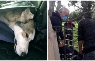 Bodrumda Vahşet: Yavruları Olan Köpek Tüfekle...