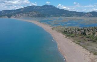 Dünyaca Ünlü İztuzu Sahilinin Konukları Caretta...