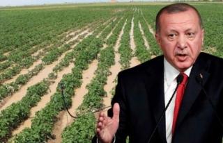 Erdoğan'ın Talimatıyla Çiftçinin Elinde...