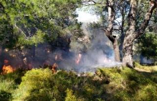 Fethiye'de Çıkan Orman Yangını Büyümeden...