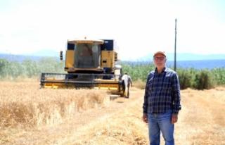 Buğday ve Arpa Milas'ta Çiftçinin Yüzünü...