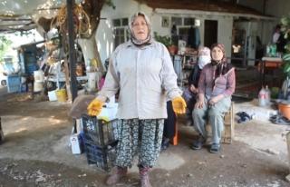 Köyceğiz'in Toparlar Mahallesinde Köylüler...