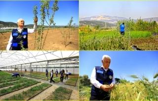 Muğla Büyükşehir Belediyesi, Akıllı Tarım Çiftliği'nde...