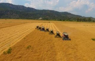 TİGEM'de Yerli Tohum Buğdayın Hasadından...