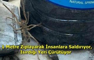 Yatağan'da Et Yiyen Örümcek Paniğe Neden...