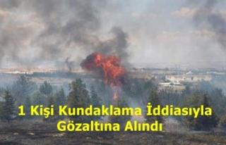Ankara'da Atatürk Orman Çiftliği'nde...