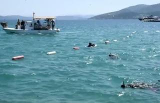 Bodrum'da Deniz Dibi Temizliği Yapıldı