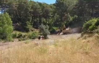 Dalaman Gürköy Mahallesinde Ormanlık Alandan Toprak...