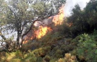 Fethiye'de Çıkan Yangında 5 Dönüm Ormanlık...