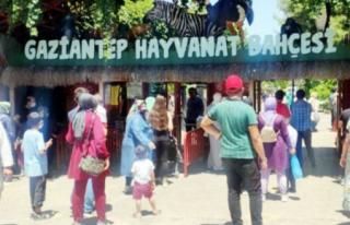 Gaziantep'te Aslan Saldırısı: 3 Yaralı