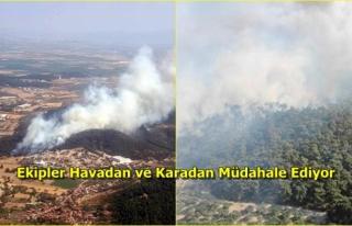 İzmir Foça'da Orman Yangını!