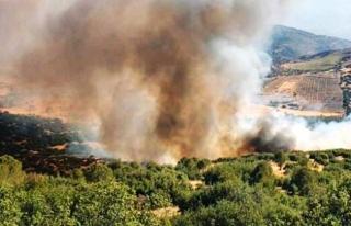 Köyceğiz'de Orman Yangını Başladı