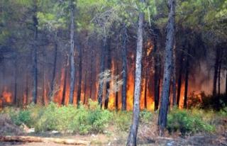 Köyceğiz'deki Yangınla İlgili 1 Kişi Tutuklandı