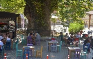 Marmaris'teki Çınar Ağacı Asırlara Meydan...