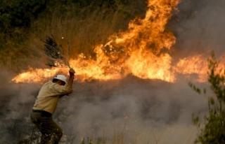 Fitch'ten, Yangın Felaketiyle Sarsılan Antalya...