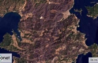 GREENPEACE, Yanan Alanların Uydu Görüntüsünü...