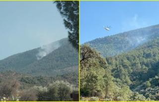 Milas'ta Çıkan Orman Yangını Büyümeden...