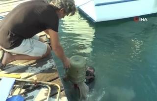 Bodrum'da 30 Bin Yavru Balığı Denize Bıraktılar