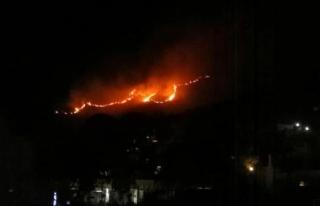 Bodrum'daki Yangında 2 Hektar Alan Zarar Gördü