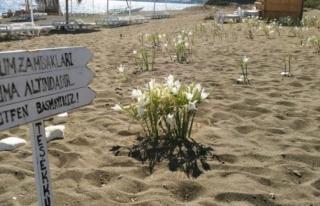 Datça'daki Bu Çiçeği Koparmanın Cezası...