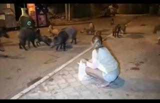 Fethiye'de Şehre İnen Yaban Domuzlarını Elleriyle...