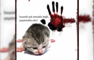 Giresun'da Vahşet: İki Yavru Kedi Cesedi Bulundu!