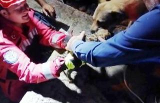 Kavaklıdere'de Sulama Kanalına Düşen Köpek...