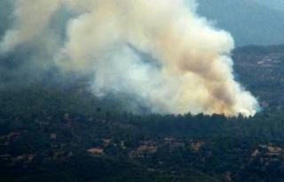 Milas'ta Çıkan Orman Yangını Kontrol Altına...