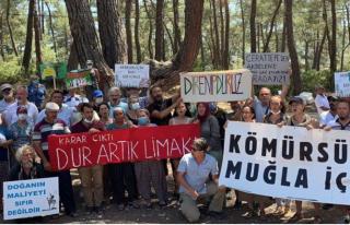 Milas'taki Akbelen Ormanları'nda Eylemcilerin...