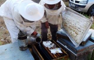 Muğla'da Üreticiler Arıların Ölmemesi İçin...
