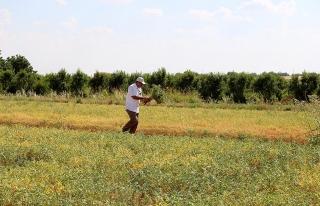 GAP'ta 'teknolojik tarım' atağı