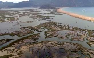 İztuzu Plajı Caretta Caretta Yuvası ve Yavru Çıkışında Rekor Kırdı