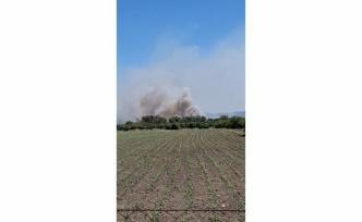 Köyceğiz'de Zirai ve Zeytinlik Alanda Yangın