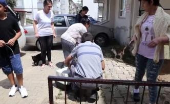 İki Kedi Yavrusunun Telef Edildiği İddiası Üzerine Araştırma Başlatıldı
