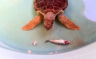 Patara Deniz Kaplumbağaları Koruma ve İzleme Programı