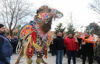 Muğlalı 'Harmandias' En Güzel Deve Seçildi!