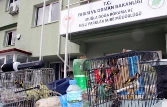 Tuzakla Saka Kuşu Avlayan Bir Kişiye 10 Bin TL Para Cezası