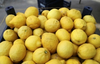 Limon İhracatı Ön İzne Bağlandı!
