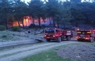 Muğla'da Orman Yangınları Erken Başladı