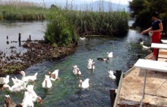 Azmak Nehrinde Kaz ve Ördekler Aç Kaldı!