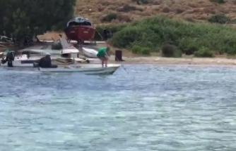 Ekipler Bodrum'da Öldürülen Köpek Balığıyla İlgili Harekete Geçti