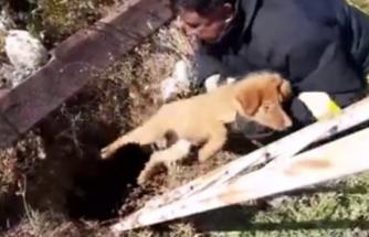 Milas'ta Çukura Düşen Yavru Köpek İtfaiye Tarafından Kurtarıldı