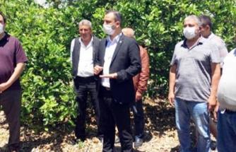 """Vekil Erbay ve İlçe Başkanı Tezcan: """"Muğla Afet Bölgesi İlan Edilsin"""""""
