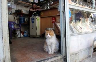Evden Çıkamadığı İçin Depresyona Giren Kedi 9 Kilo Oldu