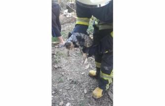 Fethiye'de Kafası Demir Boruya Sıkışan Kediyi İtfaiye Kurtardı