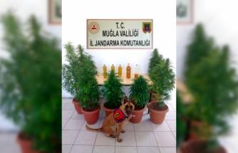 SEYDİKEMER'DE, JANDARMADAN UYUŞTURUCU VURGUNU