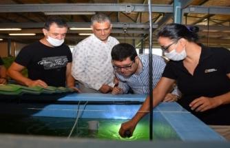 Barış Saylak Milas'ta Karides Üretimi Tesislerini Ziyaret Etti