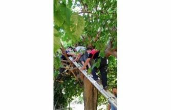 Fethiye'de Ağaçta Mahsur Kalan Yaşlı Adam Kurtarıldı!