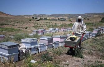 Milaslı Arıcı, Arıları İçin Evinden 860 Kilometre Uzakta Yaşıyor